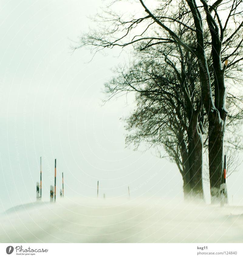 Test Drive pt.III Winter weiß Wald Baum Baumstamm Geäst Baumkrone kalt Erzgebirge Feld Schneesturm Sandverwehung Geländewagen Allee Landstraße Geschwindigkeit