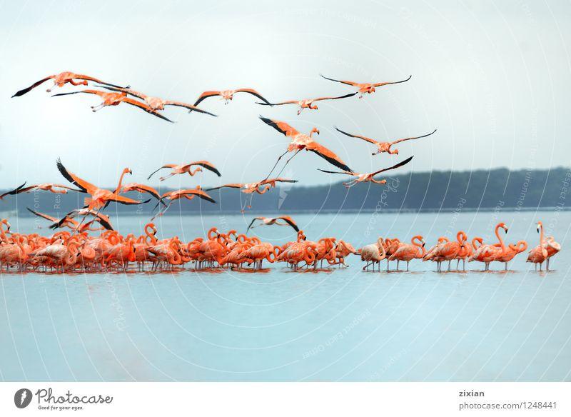 größere Flamingos Tier Wildtier Tiergruppe Herde Schwarm Farbe Teamwork Farbfoto mehrfarbig Morgen Tag Licht Sonnenlicht Vogelperspektive