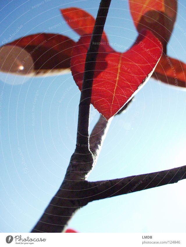 Blatt für Blatt Himmel Baum Sonne blau Pflanze rot Blatt schwarz Farbe Lampe Herbst Kraft Wachstum fallen Ast Vergänglichkeit