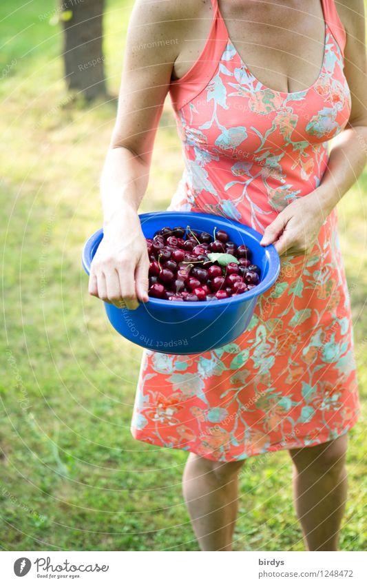 Kirschernte Mensch Frau Natur Sommer Erotik Erwachsene Wärme Wiese feminin Garten Lifestyle Frucht Körper stehen ästhetisch Ernährung
