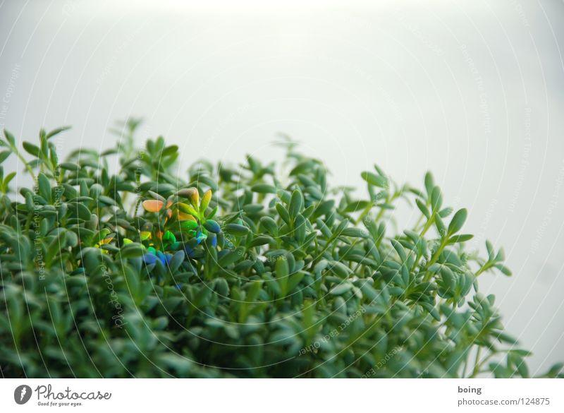 Kresse blau grün rot Sonne Farbe gelb Gesundheit Ernährung Wassertropfen Hoffnung Symbole & Metaphern Gemüse Sehnsucht Kräuter & Gewürze Strahlung Regenbogen