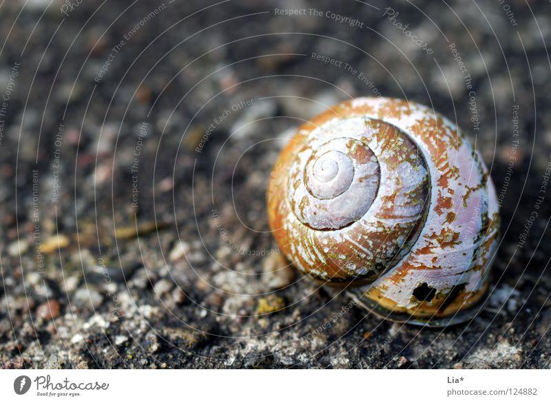 raue Ruine Haus Einsamkeit Tod Stein Traurigkeit leer Trauer rund kaputt Vergänglichkeit verfallen trocken Schnecke Schalen & Schüsseln Spirale