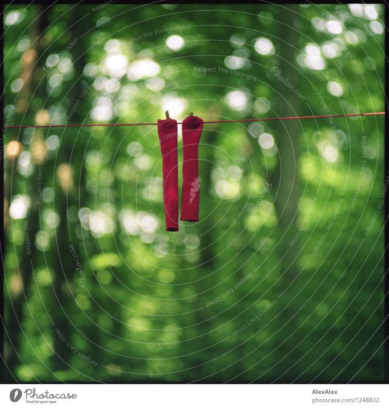 pZ3 | Pärchen Umwelt Natur Landschaft Pflanze Baum Wald Strümpfe Wäscheleine Seil Klammer Wäscheklammern rote Socken hängen ästhetisch Coolness dick