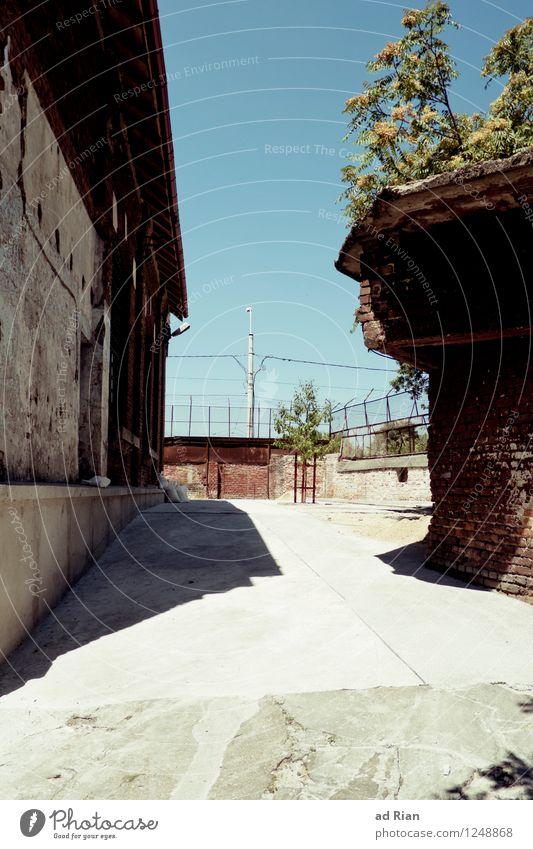 Zerfall alt Baum Wand Architektur Senior Mauer Fassade Arbeit & Erwerbstätigkeit Armut Warmherzigkeit Schönes Wetter Ewigkeit historisch Industriefotografie
