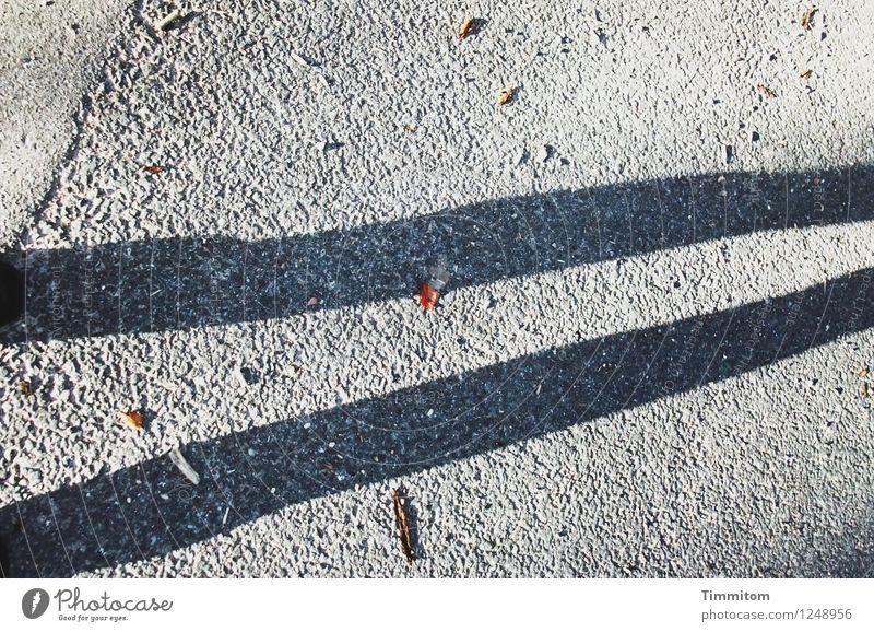 Skinny Legs. Blatt schwarz Straße Herbst grau Beine braun Linie stehen Schuhe ästhetisch einfach dünn deutlich