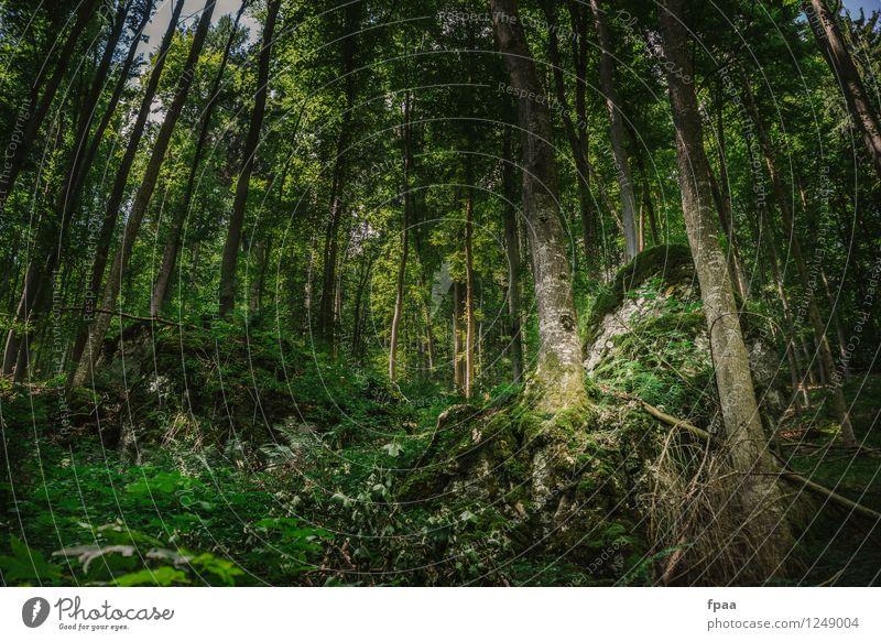 Stock und Stein verwachsen Natur alt Pflanze grün schön Sommer Baum Landschaft ruhig Wald Umwelt gelb natürlich braun Erde wandern