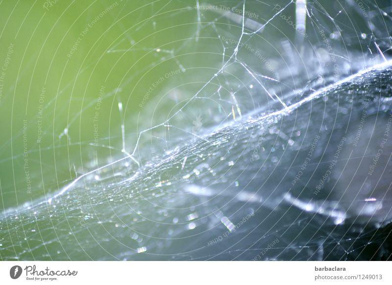 Silberlamé Umwelt Natur Spinne Spinnennetz Netzwerk leuchten fantastisch hell wild silber bizarr Farbfoto Außenaufnahme Detailaufnahme abstrakt Muster