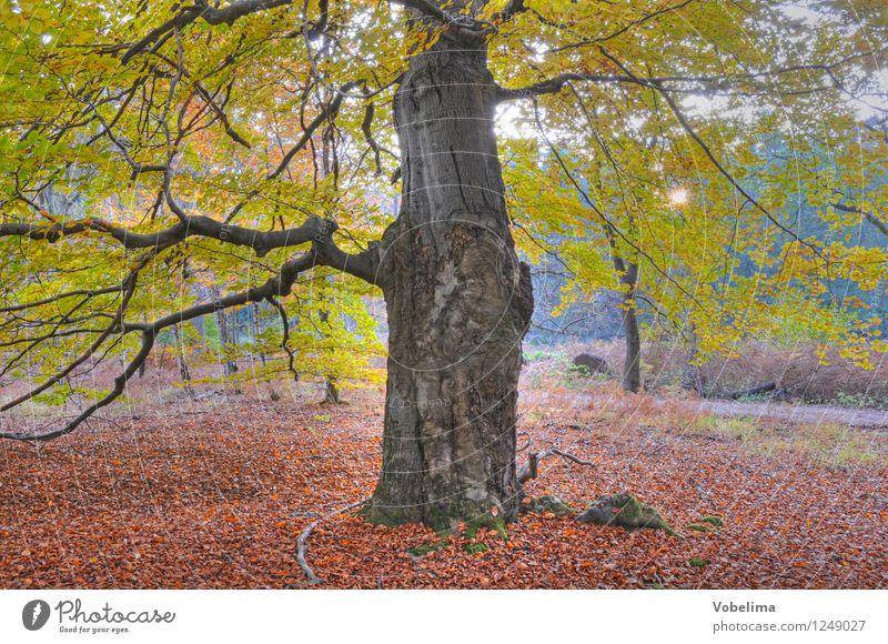 Baum im Herbst Natur Sonne Sonnenlicht Wald braun gelb gold grün rosa rot Farbfoto Außenaufnahme Menschenleer Textfreiraum unten Tag Sonnenstrahlen Gegenlicht