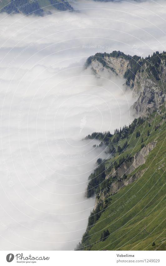 Talnebel im Muotatal Berge u. Gebirge Natur Landschaft Wolken Wetter Nebel Felsen Alpen grau grün weiß ruhig forstberg Muotataler Alpen talnebel Wolkenfeld