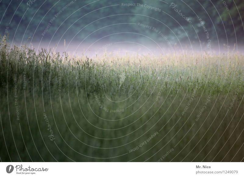 stellenweise nebel Umwelt Natur Landschaft Nebel Pflanze Baum Gras Grünpflanze Wildpflanze Wiese Feld Wald grün Nebelschleier Nebelstimmung Morgennebel Tau