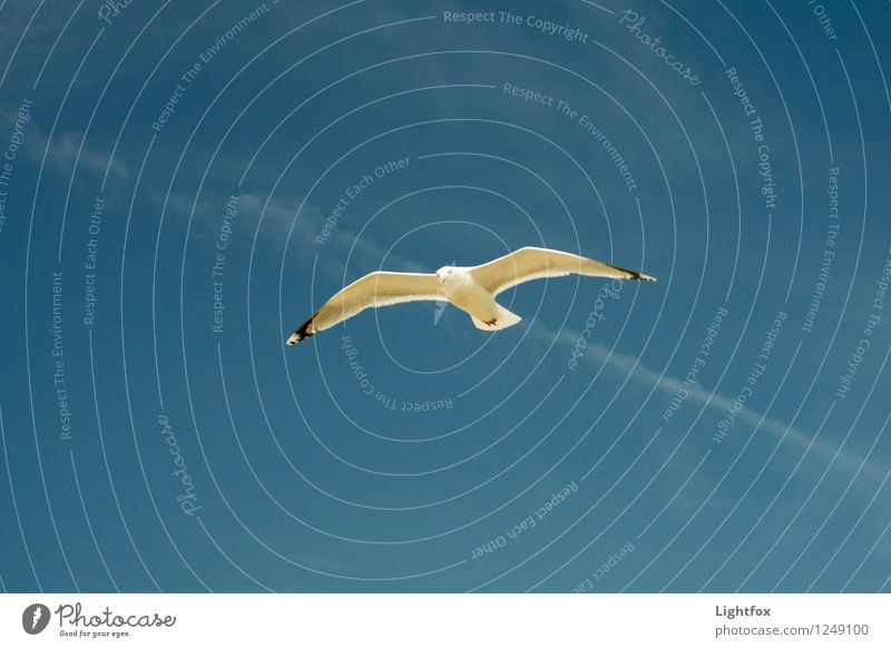 Möwen Pic Himmel (Jenseits) Meer Einsamkeit Tier Ferne Vogel elegant Fliege Fernweh Abheben