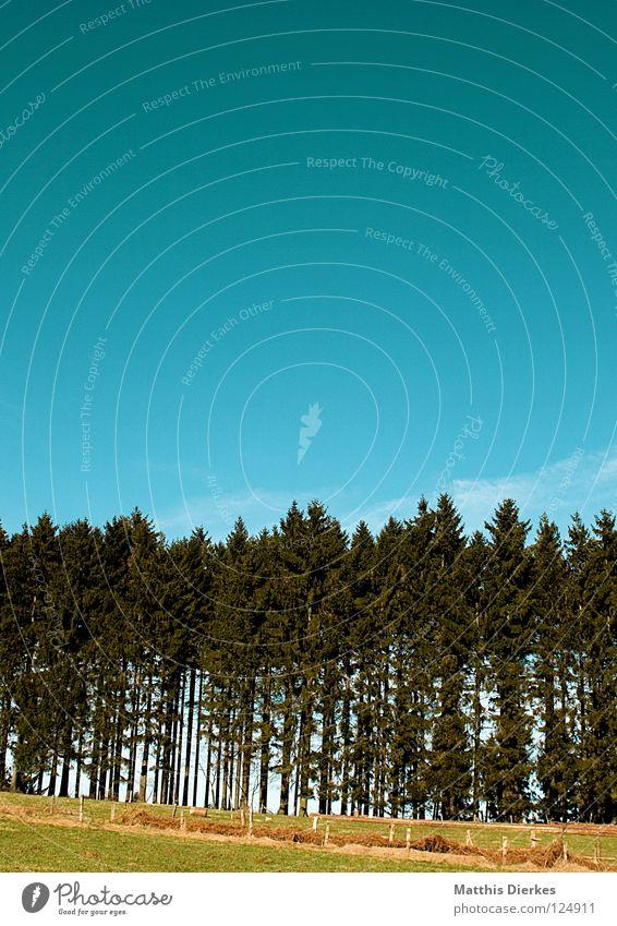 Waldrand Himmel Natur Ferien & Urlaub & Reisen grün Sommer Baum rot Blatt Wolken Tier Umwelt gelb Traurigkeit Frühling Tod
