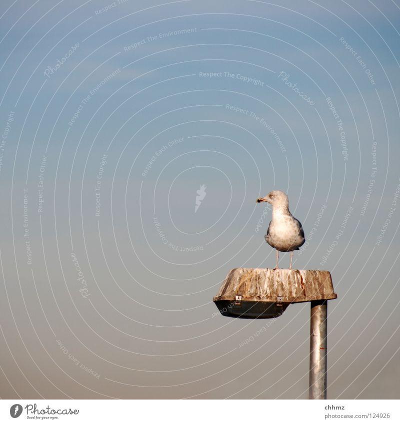 Möwenklo Meer Einsamkeit Erholung See Beleuchtung Vogel Aussicht Feder Toilette Kot Laterne Vorgesetzter erhaben Flugtier