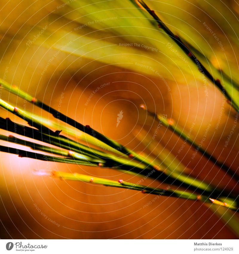 Feurig grün rot Wiese Gras Frühling Park orange Hintergrundbild Brand Stengel Schilfrohr Echte Farne Lichtpunkt feurig Ginster