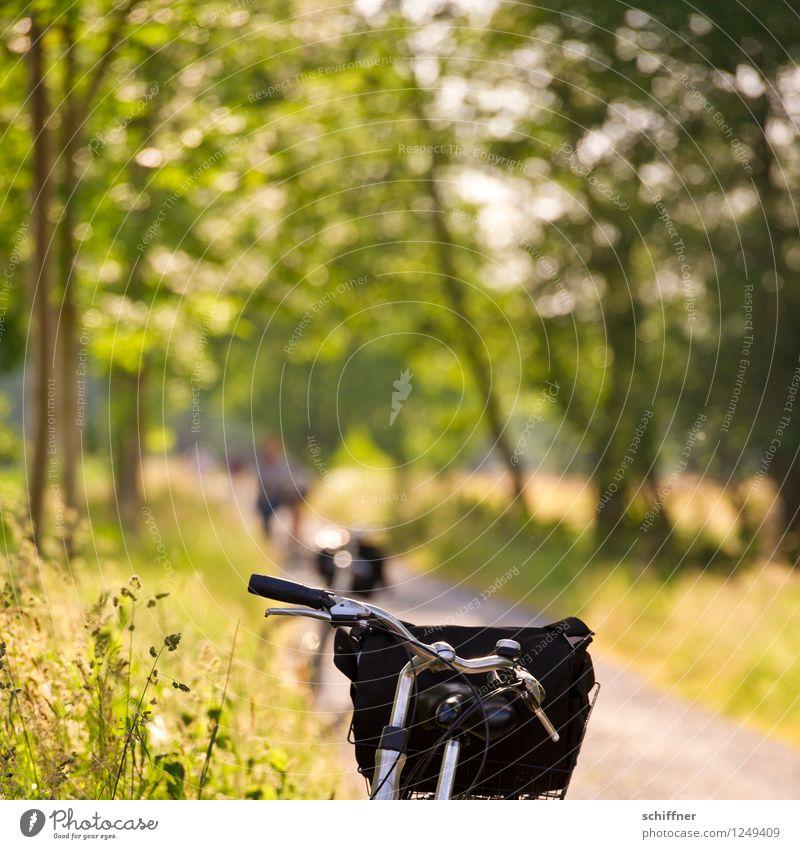 Spreedorado | Drahteseltraum Natur Ferien & Urlaub & Reisen Sommer Sonne Baum Landschaft ruhig Wald Wiese Gras Freizeit & Hobby Feld Tourismus Fahrrad Sträucher