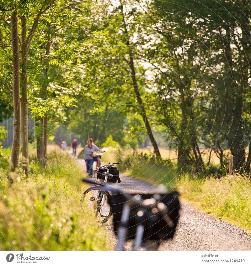 Spreedorado | Motivjagd Mensch maskulin feminin Frau Erwachsene Mann Menschengruppe Landschaft Pflanze Sonnenlicht Sommer Schönes Wetter Baum Gras Sträucher