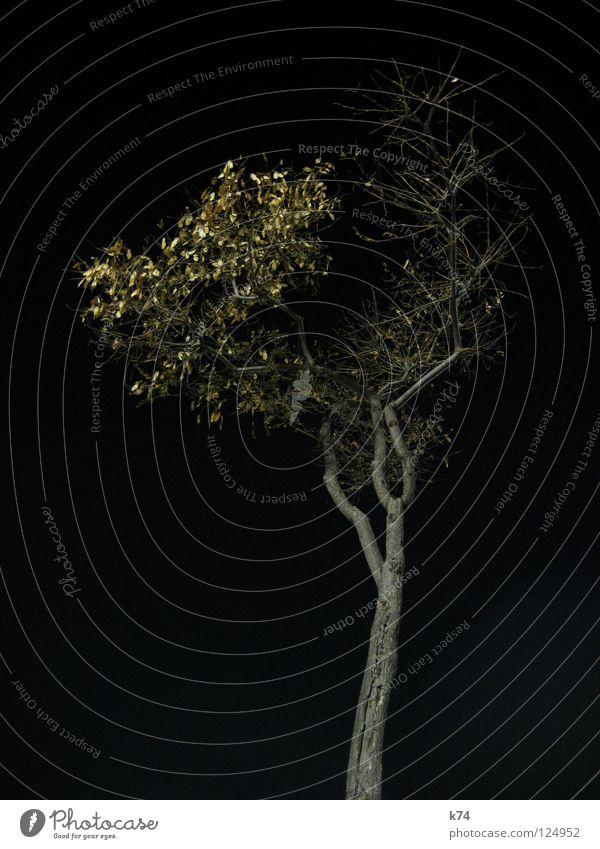 Barcelona Hafen II Nacht schwarz dunkel Kunstlicht Beleuchtung Baum Winter Selbstständigkeit Einsamkeit einzeln einzigartig aufstrebend verzweigt Blatt