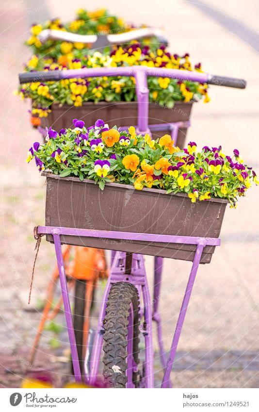 Fahrrad mit Blumenkasten alt schön Dekoration & Verzierung Romantik Freundlichkeit Stillleben Nostalgie Stiefmütterchen