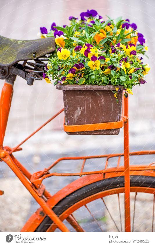 Fahrrad mit Blumenkasten schön Dekoration & Verzierung alt Freundlichkeit Romantik Nostalgie Stiefmütterchen Stillleben farbig sonnig orange mehrfarbig
