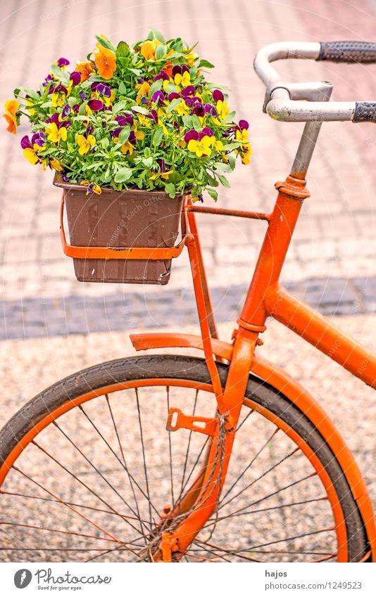 Fahrrad mit Blumenkasten Dekoration & Verzierung Pflanze Topfpflanze alt Freundlichkeit Romantik Nostalgie Stiefmütterchen Stillleben farbig sonnig orange