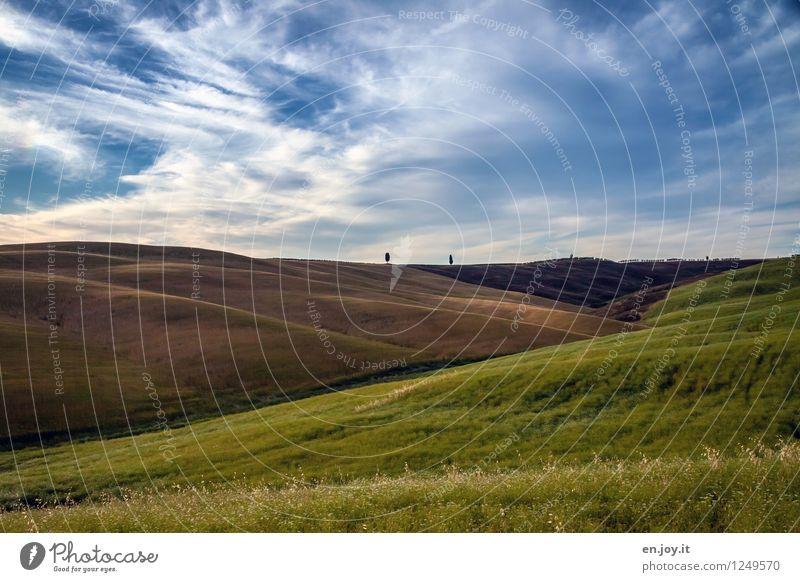 vereinzelt Himmel Natur Ferien & Urlaub & Reisen Pflanze Sommer Gesunde Ernährung Landschaft Wolken Ferne Umwelt Freiheit Horizont Feld Wachstum Wellen