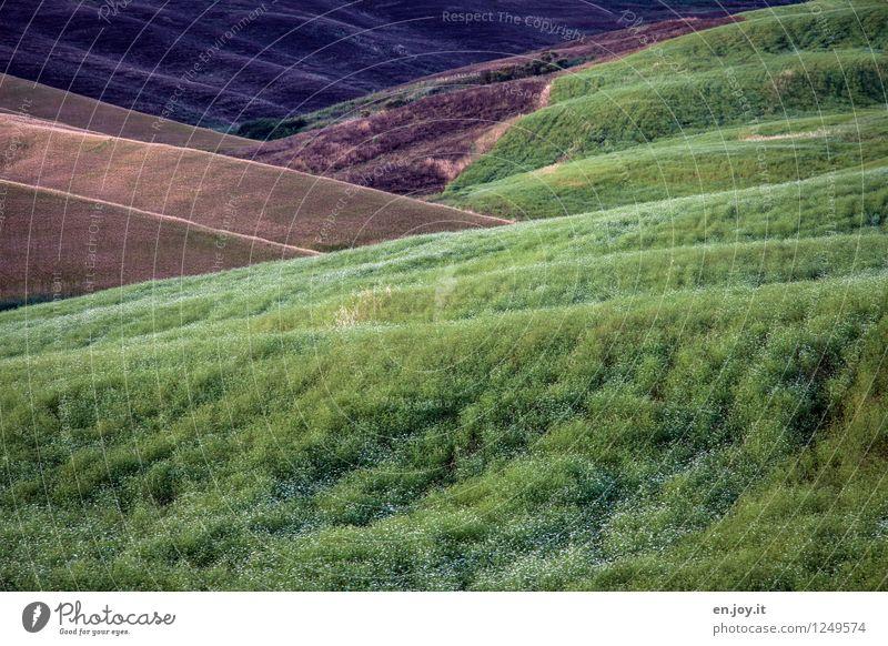 Koriander Natur Ferien & Urlaub & Reisen Pflanze grün Sommer Landschaft Gesunde Ernährung Umwelt braun Lebensmittel Gesundheitswesen Feld Wachstum Italien