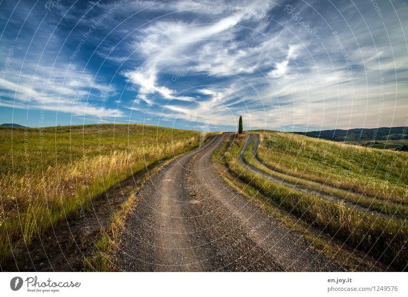 mittendrin Himmel Natur Ferien & Urlaub & Reisen Sommer Baum Landschaft Wolken Ferne Umwelt Leben Wiese Wege & Pfade Horizont Tourismus Feld wandern