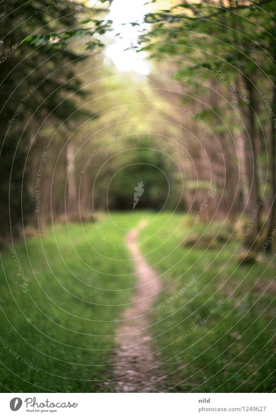 Waldweg Fitness harmonisch Erholung ruhig Umwelt Natur Landschaft Pflanze Frühling Sommer Baum Gras Park Wege & Pfade laufen Helios Unschärfe Farbfoto