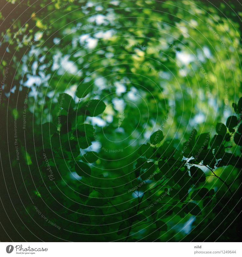 Blattwerk Natur Pflanze grün Sommer Baum Wald Umwelt Umweltschutz analog