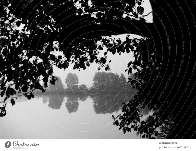 Ufer See Teich Baum Reflexion & Spiegelung Küste Wasser Feisneck Müritz-Nationalpark