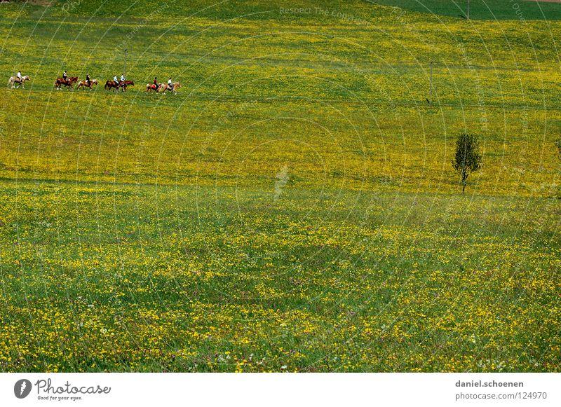 dauert nicht mehr lange ! grün schön Sonne Sommer Blume Erholung gelb Wiese Wärme Frühling Blüte Horizont Wetter Hintergrundbild Freizeit & Hobby Pferd