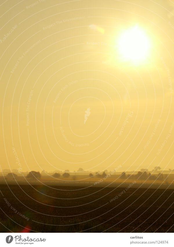 Lichtblick Morgennebel Nebel Wiese Zaun Dunst Wolken Farblosigkeit Gras Nebelschleier Hoffnung Tatendrang Schleier Sonnenaufgang gelb Wetter Morgendämmerung