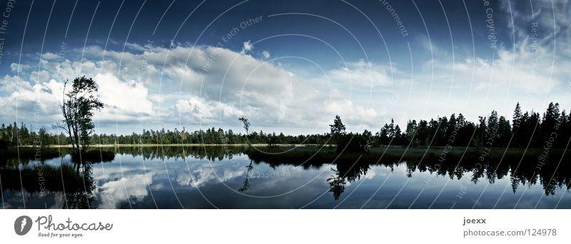 Klarheit I abgelegen Baum beschaulich Einsamkeit Erholung dunkel Gegenlicht ruhig Horizont Idylle kalt Naturliebe Panorama (Aussicht) schweigen See Glätte