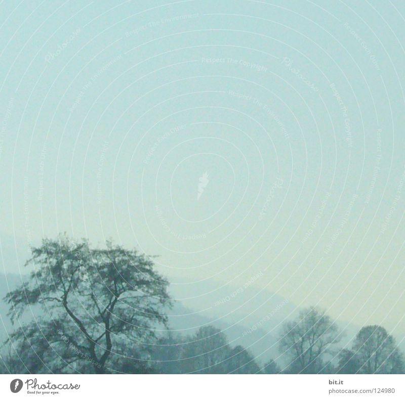 STRUWWEL-BAUM Himmel Natur blau Ferien & Urlaub & Reisen Baum Einsamkeit Wolken Winter Wald Ferne kalt Berge u. Gebirge Schnee Holz Luft Linie