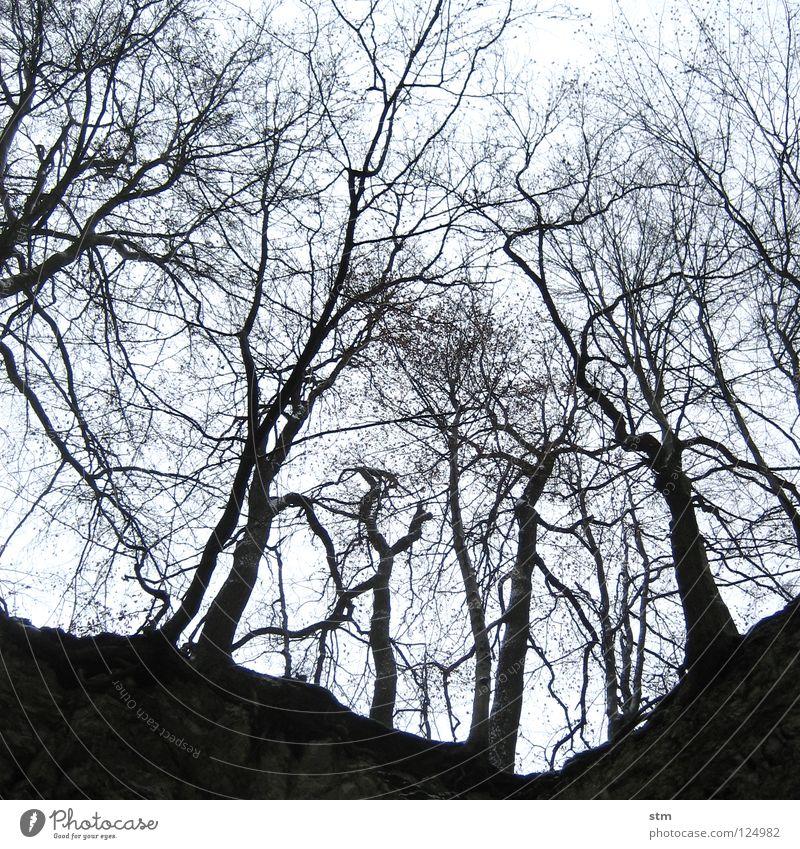 stille 4 Himmel Baum Einsamkeit ruhig Winter Wald Traurigkeit Tod Stein wandern Perspektive Ast Hoffnung Trauer unten Verzweiflung