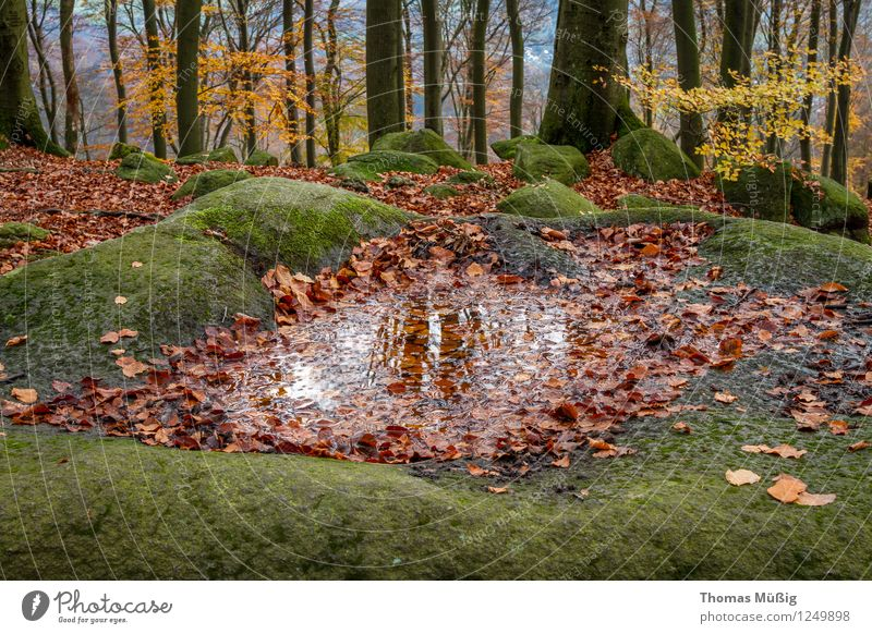 Felsenmeer Natur Ferien & Urlaub & Reisen Pflanze Landschaft Wald Tourismus wandern Urelemente Moos