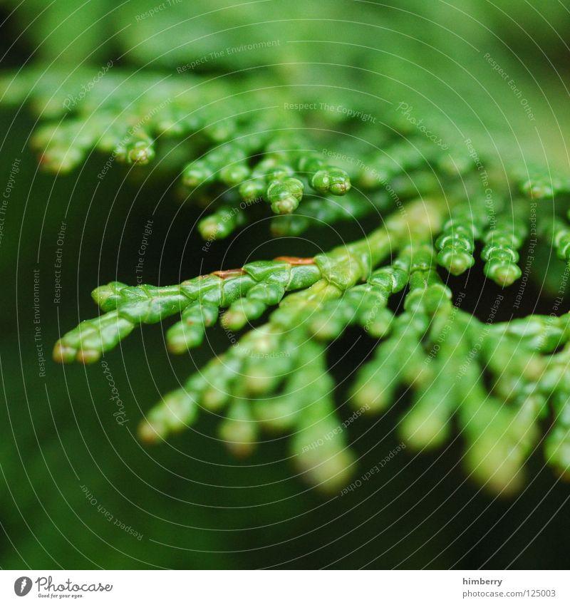 grüne lunge Natur grün Baum Umwelt Frühling Luft Park Wildtier Wachstum Tanne Umweltschutz Forstwirtschaft Nadelbaum Sauerstoff Holzmehl Baumschule