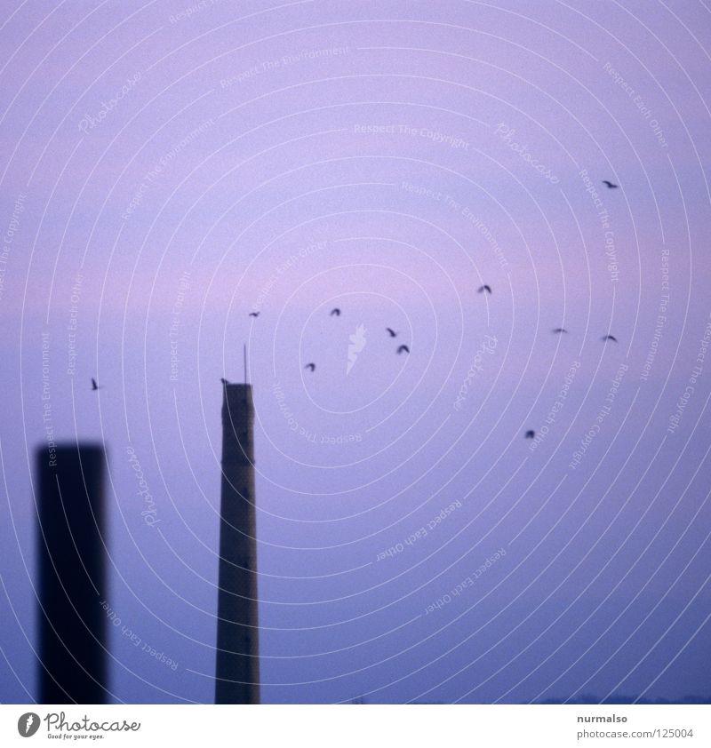 tomorrow bird Vogel Morgen Sonnenaufgang violett zart Röte aufstehen analog Dia Ferne Horizont Schweben leicht frisch fantastisch Ruine Rest Mauer Ziegelei