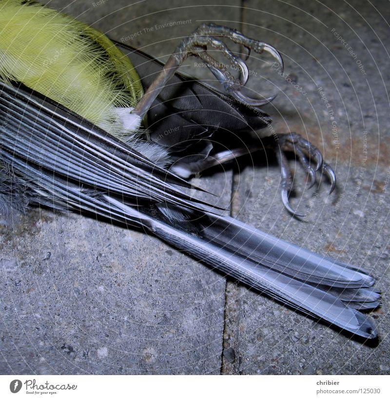 Still geworden... Außenaufnahme Nahaufnahme Detailaufnahme Blitzlichtaufnahme Tier Totes Tier Vogel Flügel Krallen Blaumeise 1 fliegen Traurigkeit trist blau