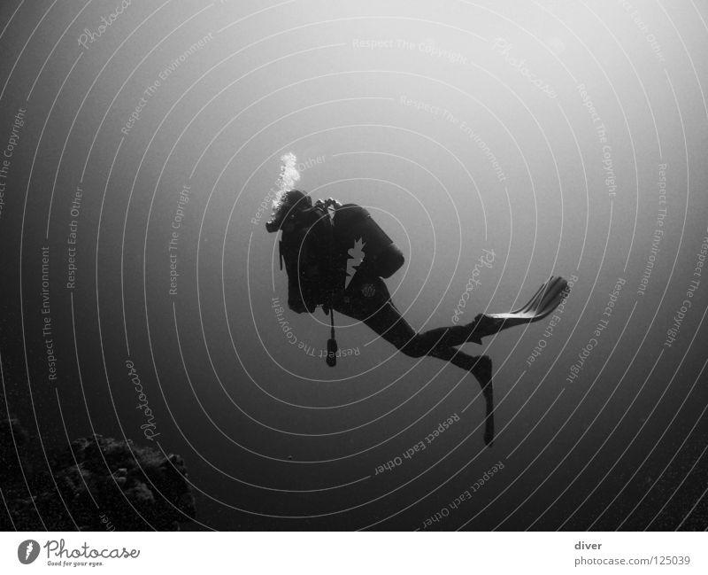 Into the deep tauchen Taucher Schweben Meer Mann Einsamkeit Unterwasseraufnahme Wassersport Schwarzweißfoto Dive Diving Sport Mensch
