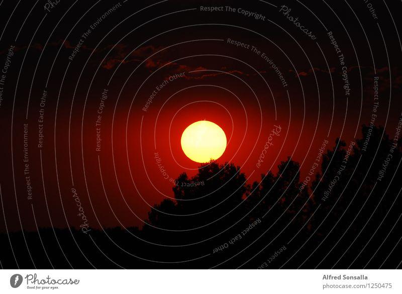 Unsere Sonne Himmel Natur Ferien & Urlaub & Reisen Sommer Baum Erholung rot Ferne Wald schwarz gelb natürlich außergewöhnlich Stimmung Horizont