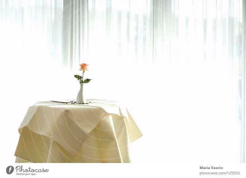 Ein Blümchen für mich - Jubiläumsfoto zum 100. Hotel dienen Tisch Restaurant Sitzung Besprechungsraum Blume Vase Einsamkeit Licht Gastronomie Glückwünsche