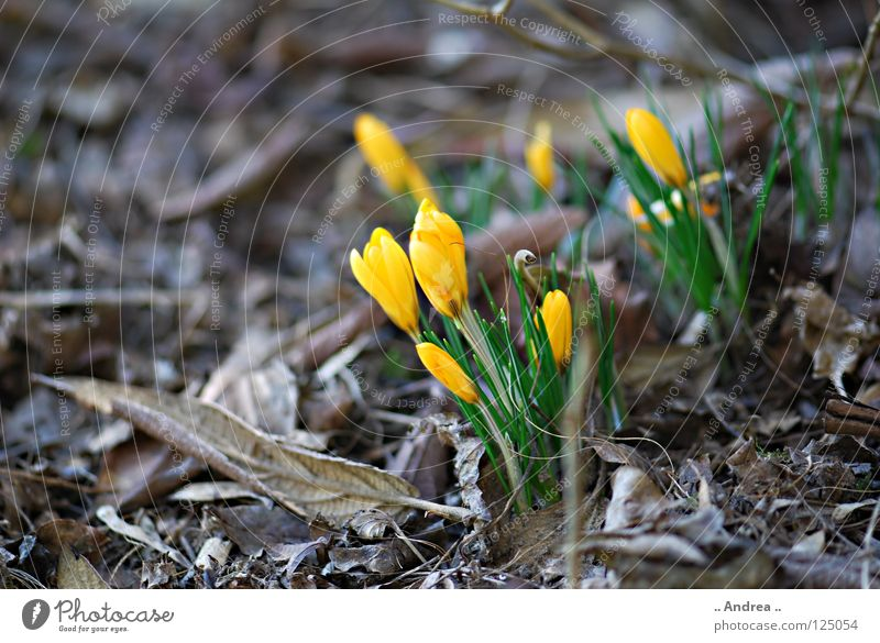 """Winter Ade"" Blume Freude gelb Frühling orange Blühend Lebensfreude weich geheimnisvoll violett dünn zart verstecken sanft seltsam Lust"