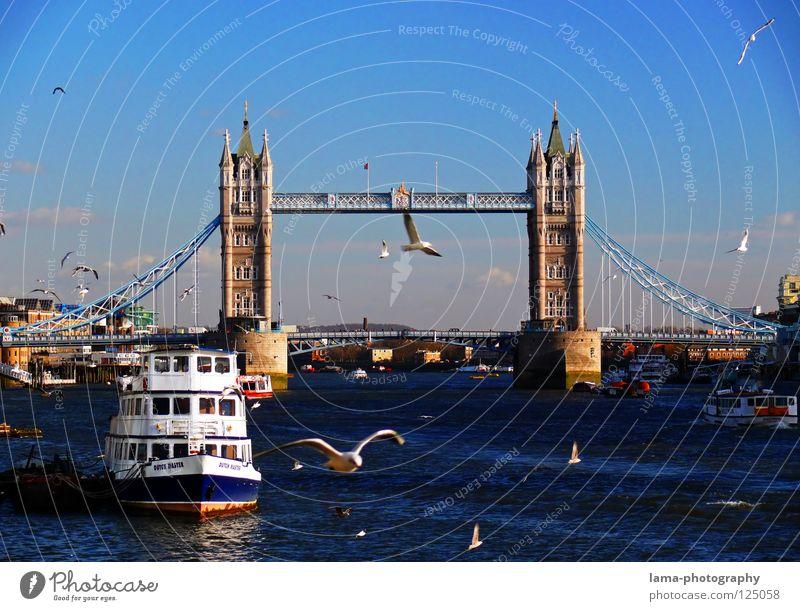 Mein(s) London Tower Bridge England Themse Großbritannien Kunst Sightseeing Hängebrücke Stahl Konstruktion Möwe Vogel Wasserfahrzeug Dampfschiff ankern Sonne