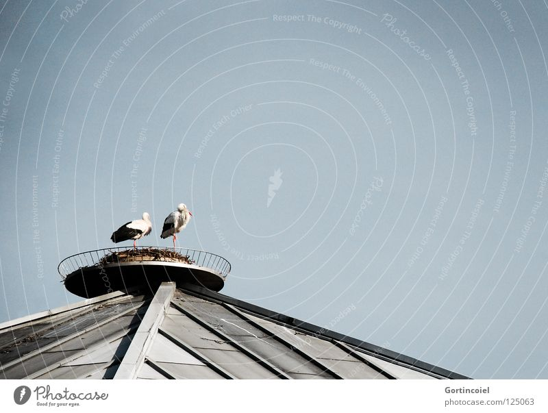 Dachbrüter Tier Storch Vogel Luft Nest Brutpflege Zugvogel Haus Gebäude Gelege Frühling Ehe grau schwarz weiß rot Himmel springen Sicherheit Wildtier fliegen