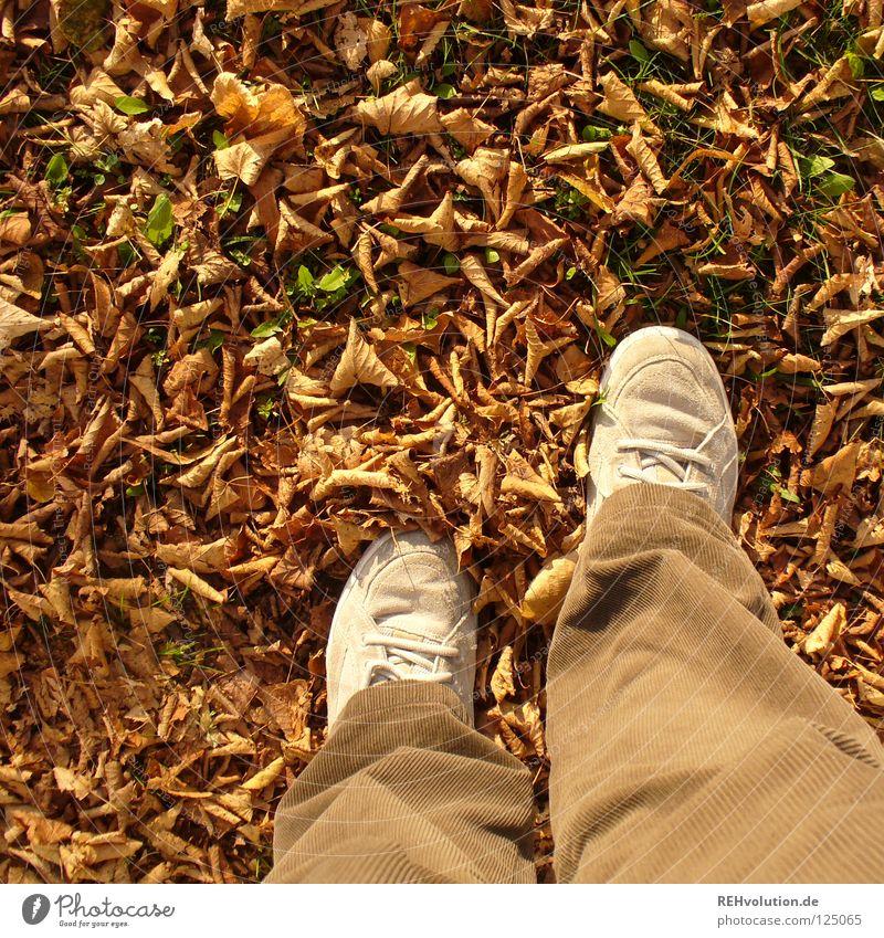 braun Mensch Freude Blatt Einsamkeit kalt Herbst Schuhe gehen stehen Wandel & Veränderung Vergänglichkeit Hose trocken Abschied Turnschuh
