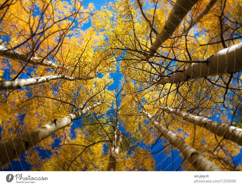 verwirrt Himmel Natur Ferien & Urlaub & Reisen blau Pflanze Baum Landschaft ruhig Wald Umwelt gelb Traurigkeit Herbst träumen rund Wandel & Veränderung