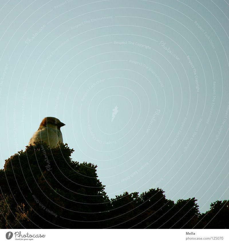 Nesthocker Himmel Baum grün blau ruhig Einsamkeit Garten Park Vogel sitzen Sicherheit Aussicht Sträucher beobachten Neugier unten