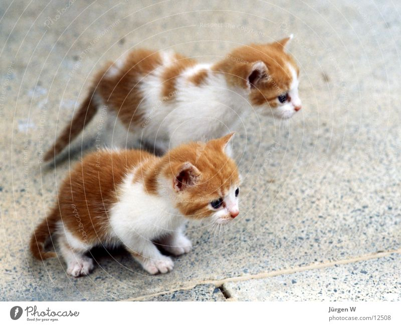 kleine Raubtiere Tier Katze klein süß Fell Säugetier mehrfarbig Kind Landraubtier