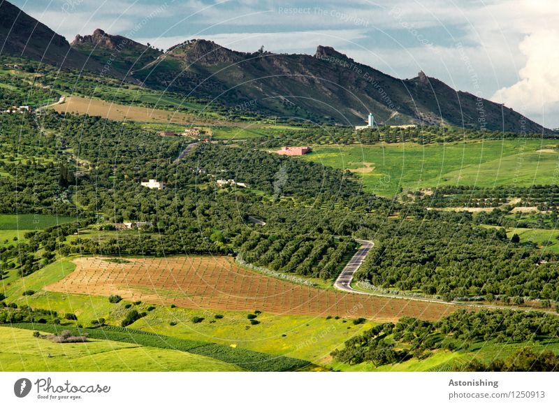Oliven - Straße Umwelt Natur Landschaft Pflanze Himmel Wolken Horizont Sommer Wetter Baum Gras Sträucher Wiese Feld Wald Hügel Berge u. Gebirge Gipfel Fes